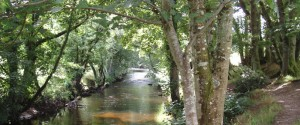 woodland-springs-9-688