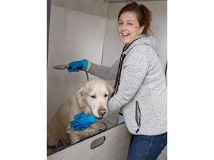 Dog-wash-Vicki