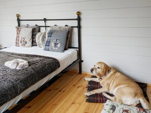 Dog in glamping lodge