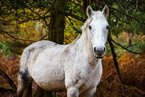 Pony in the New Forest in Autumn