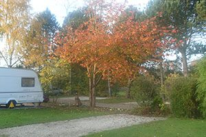 Autumn colour at Overbrook Caravan Park