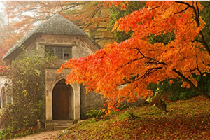 Stourhead autumn display