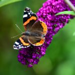 Greendale-Farm-Tranquil-Parks-Adults-Only-Holidays-Butterfly