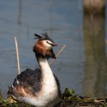 Greendale-Farm-Tranquil-Parks-Adults-Only-Holidays-grebe-Rutland-Water