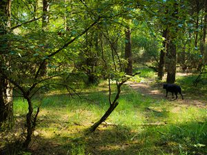 Dog in the woodland at Back of Beyond