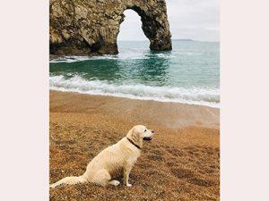 Dog on the beach at Durdle Door, Dorset