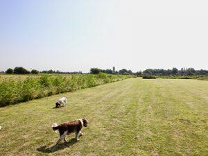 Delph Bank dog walk area