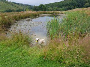 Red Kite Touring Park dog pond