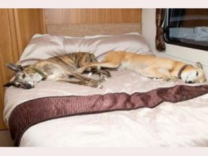 South Wales Touring Park dogs asleep in caravan