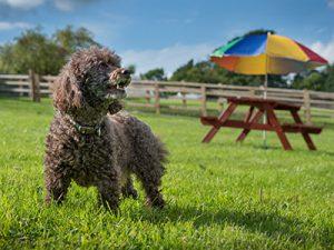 Terrier at Llwynifan Farm,