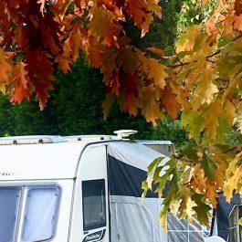 Autumn caravan pitch at Longnor Wood Holiday Park
